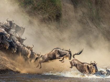 La Grande Migration des gnous Safari au Kenya -12J/10N