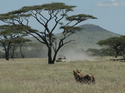 Safari Tanzania Anders 12J/11N