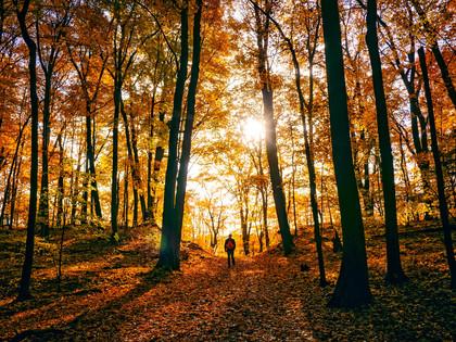 Weekend onderdompeling in het bos in vol raad 2J/1N