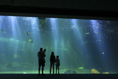 Le plus grand aquarium d'Europe : Nausicaa